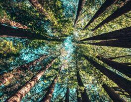sustainability trees