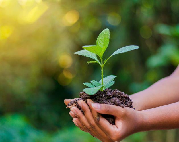 environment blog
