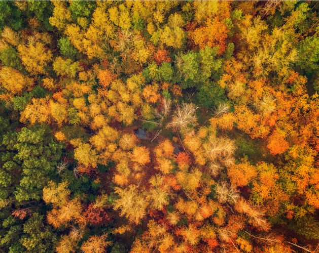 Autumn trees aerial image sustainability
